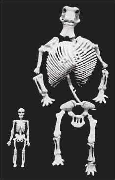 animal fossils as the